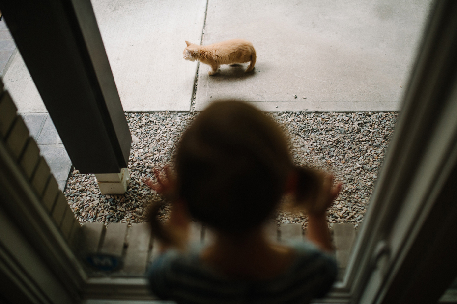 A two year old girl spies on her kitten during a documentary family portrait session in Ferndale photographed by Ann Arbor Wedding Photographer, Heather Jowett.