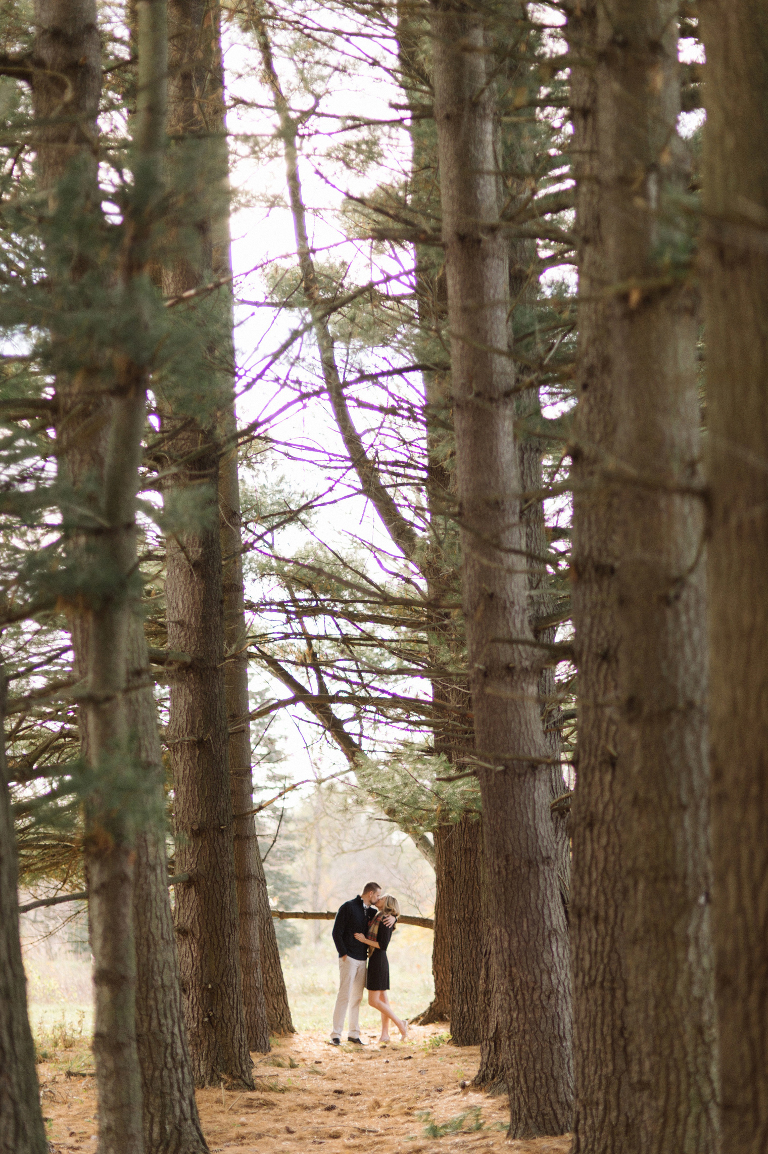 A couple poses between a line of pines during a photography session in Ann Arbor.