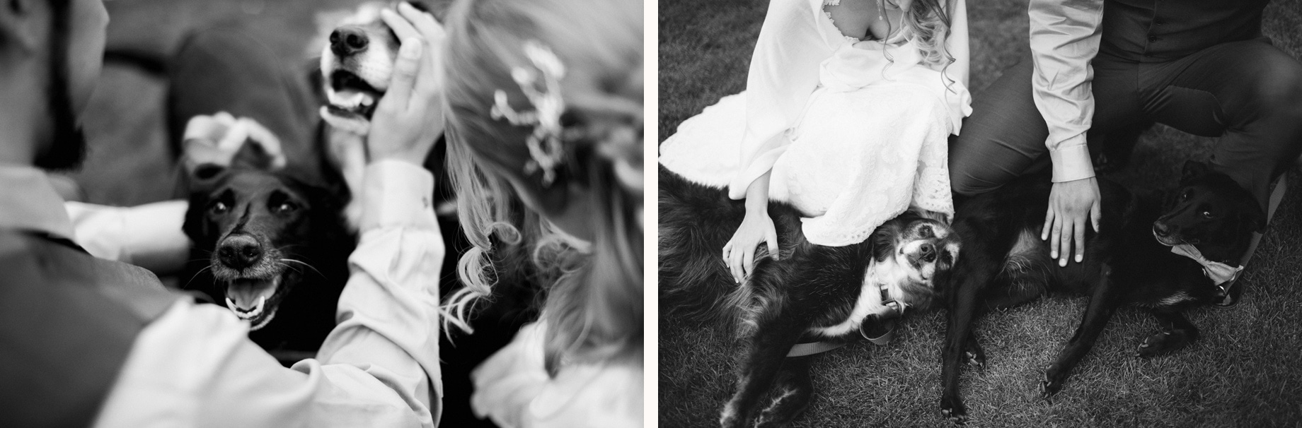 bride and groom with two dogs