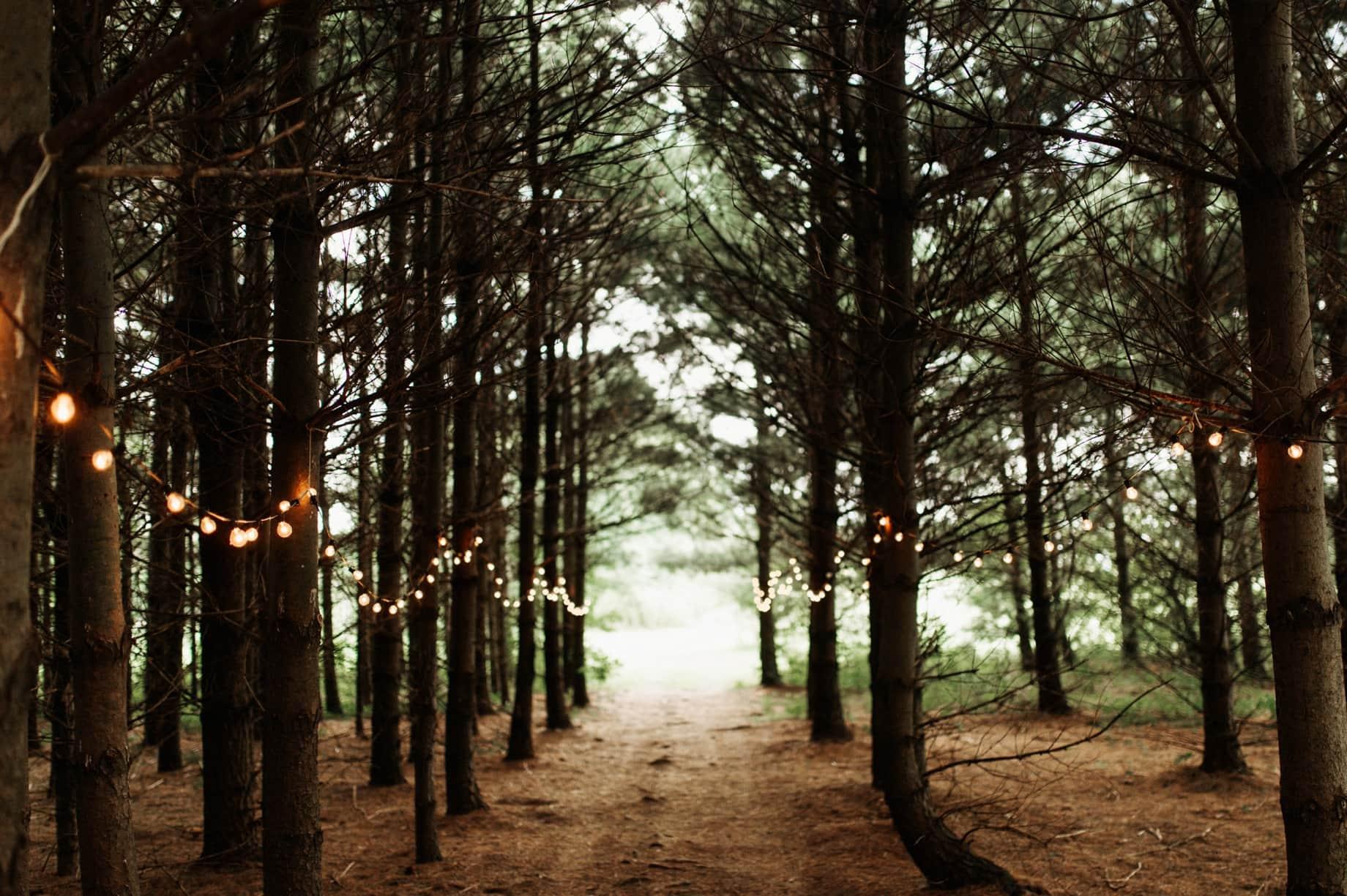 pine forest wedding ceremony