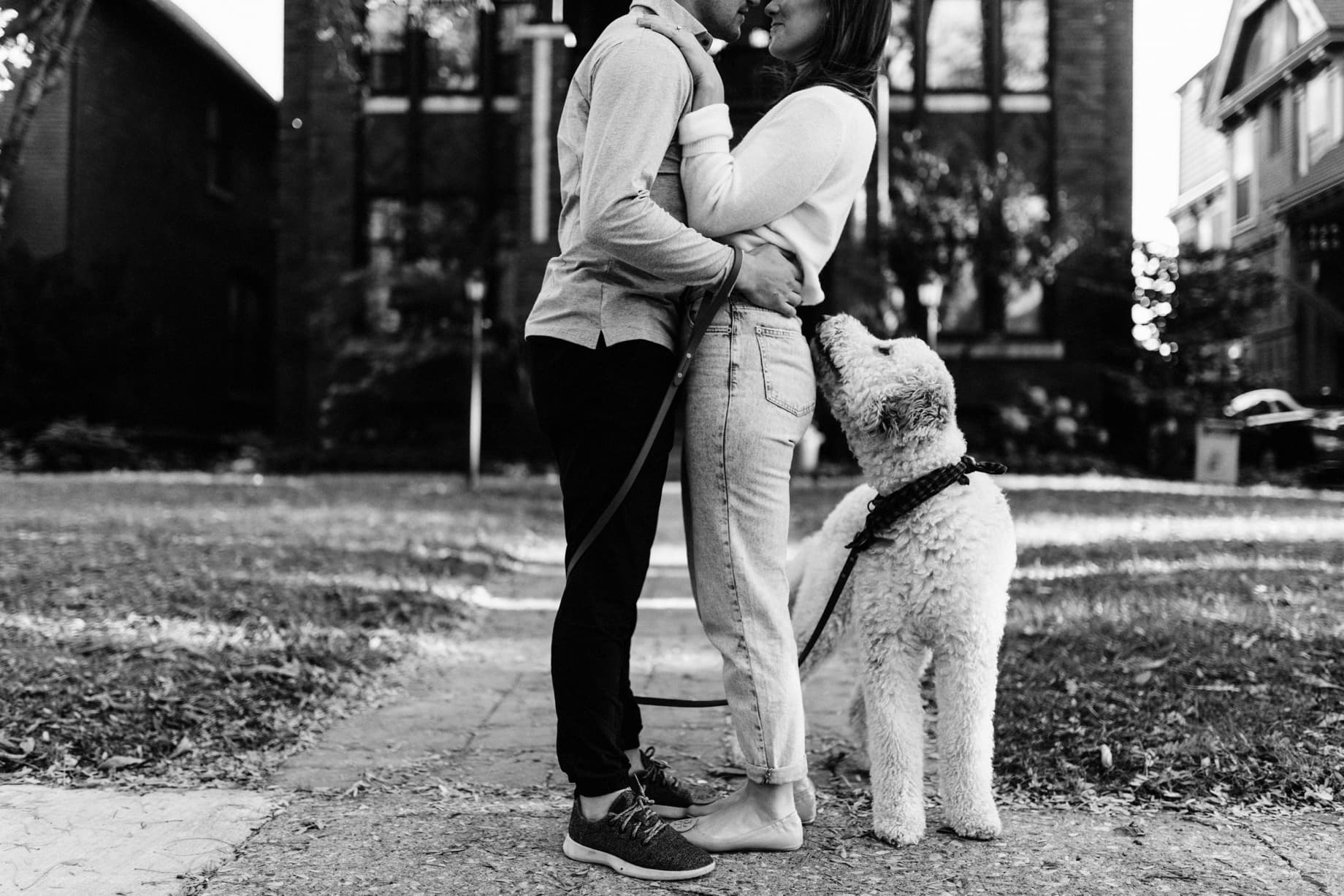 labradoodle engagement session