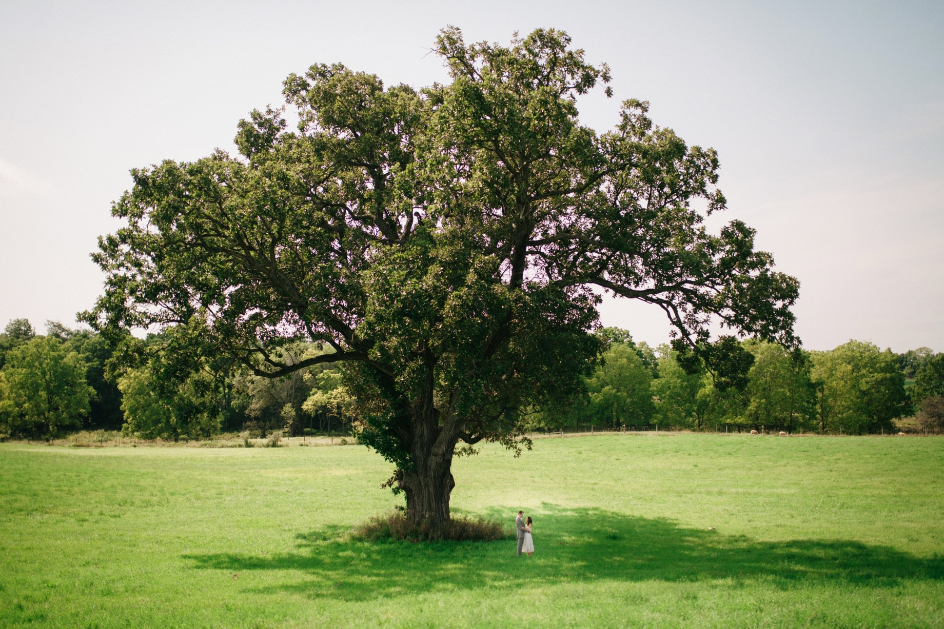 a scenic couples portrait under a large oak tree